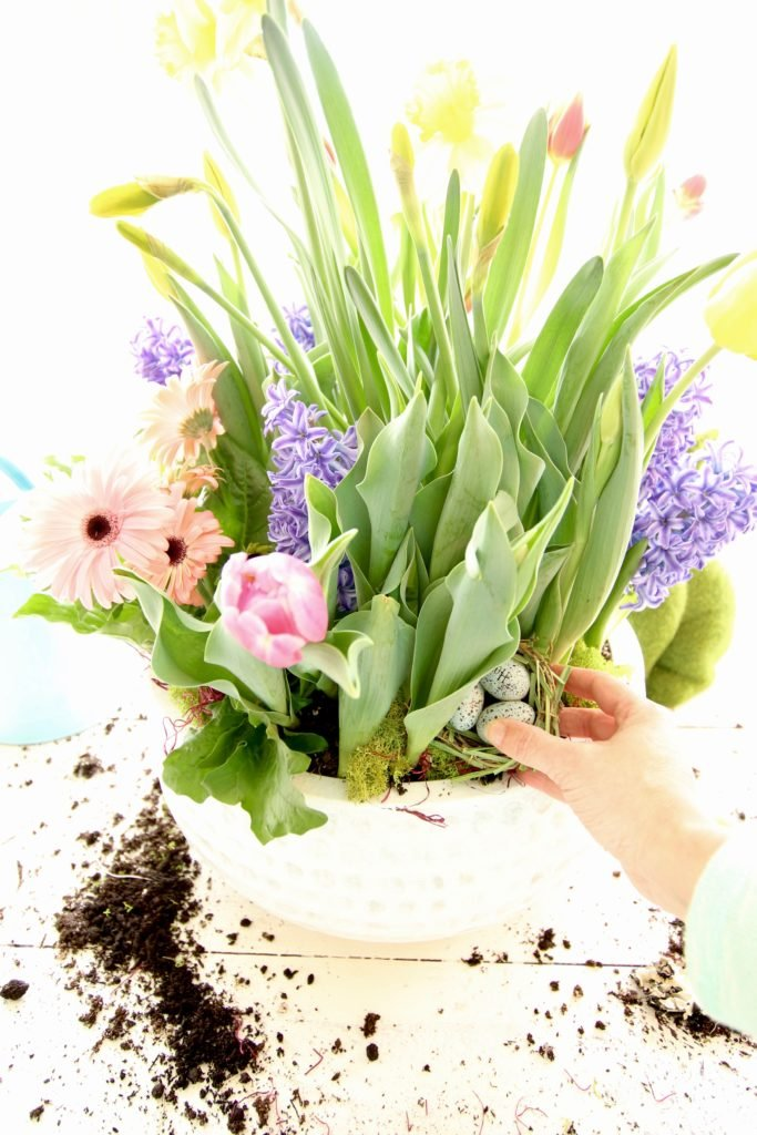 gerbera_daisies_container_garden_spring_easter_planter_flowers_white_moss_rabbits_meme_hill